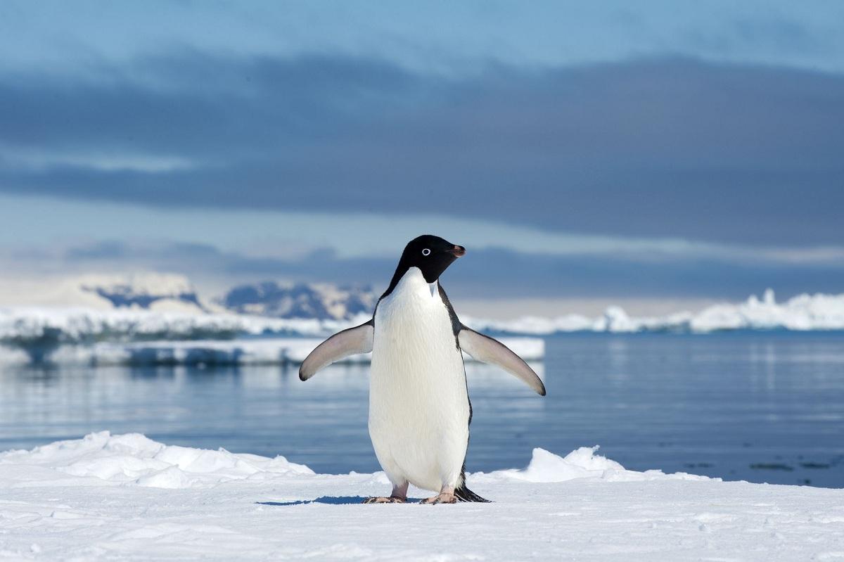 South Africa Penguin Tour