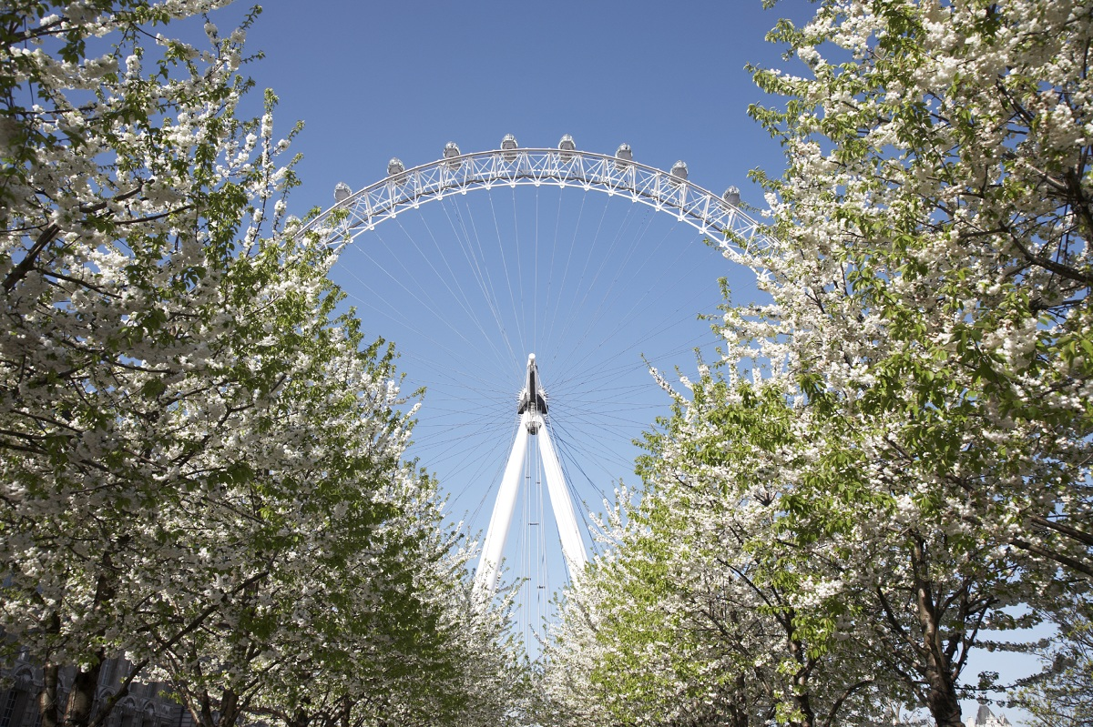 Spring Blossoms The Top Favorite Destinations For A Family