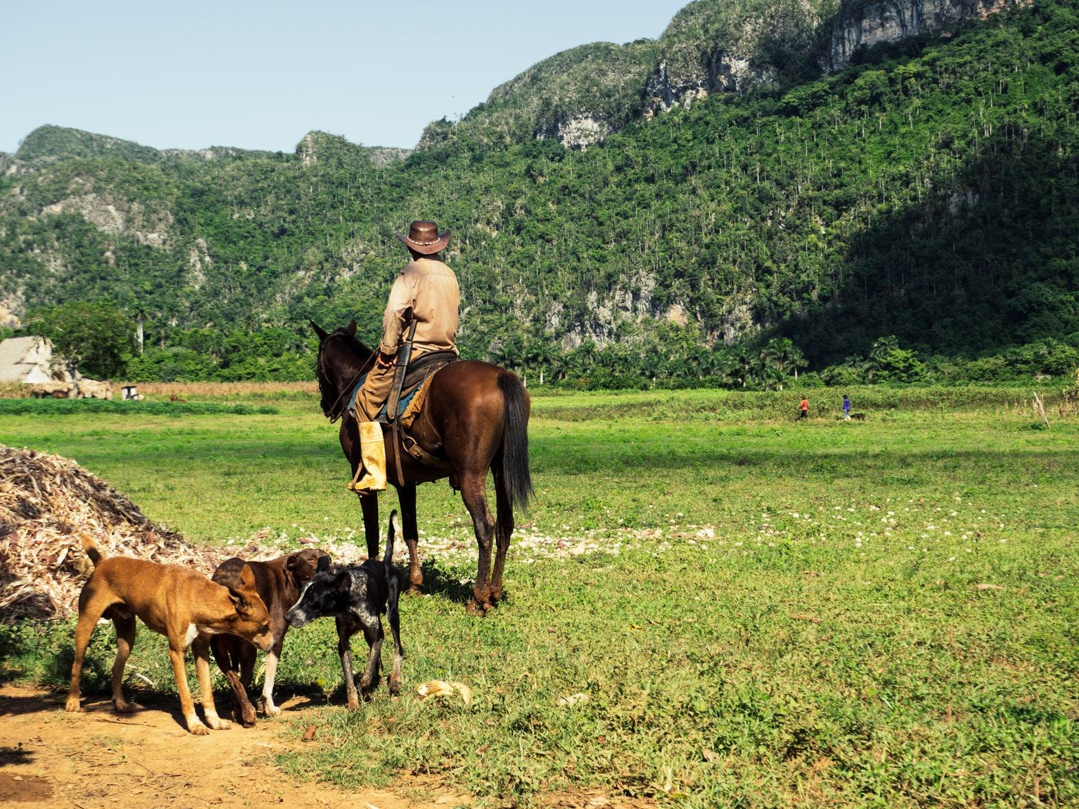 276a2293c ويمكنك استكشاف الوادي من خلال ركوب الخيل. وهو بالتأكيد واحد من الأشياء  الأكثر أصالة للقيام بها في كوبا.